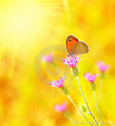 Free Beautiful Yellow Butterfly Stock Photo - 18698540