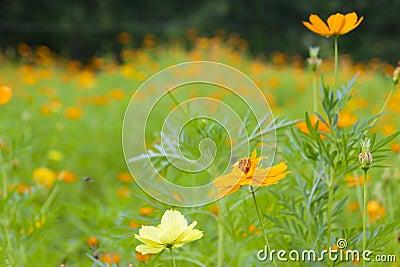 Beautiful yellow flower garden