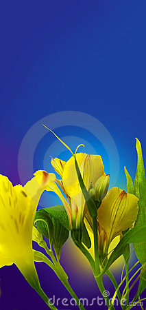 Beautiful Yellow flowers, cut