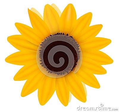 Beautiful yellow Sunflower. Vector