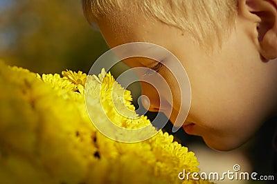 Beautiful young boy, yellow flowers