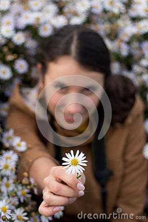 Beautiful young brunette girl gives a white flower, chamomile