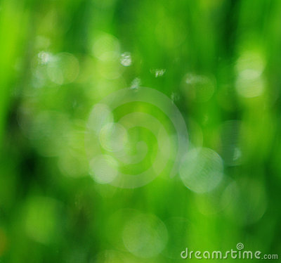 Beautifull blur green background