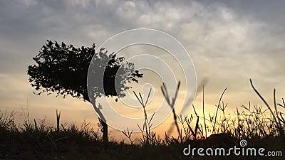 Beautil soluppgång tidigt på morgonen i Malaysia Ett träd med gyllene ljus stock video