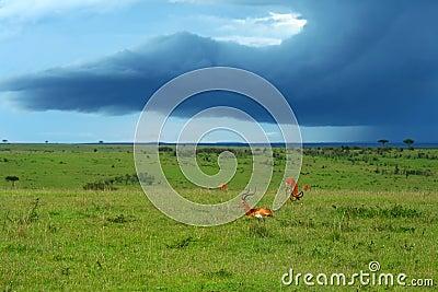 Beauty of Africa landscape