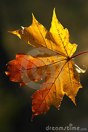 Beauty of autumn forms