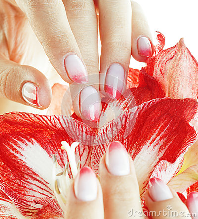 Free Beauty Delicate Hands With Pink Ombre Design Manicure Holding Flower Amaryllis Close Up Isolated Warm Macro Royalty Free Stock Photography - 68621137