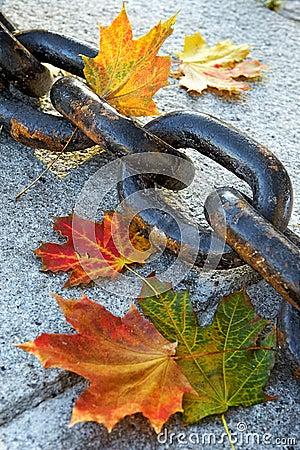 Beauty of  fading autumn