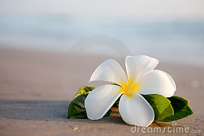 Beauty flowers on the beach