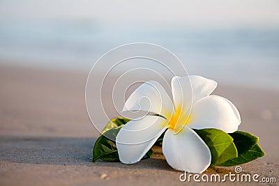 Beauty flowers on the beach