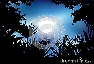Beauty jungle silhouette