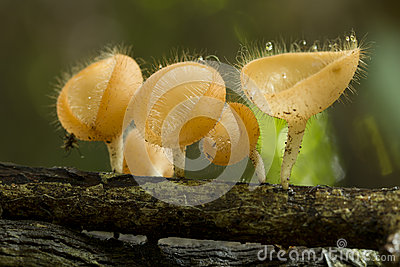 Beauty Mushroom in forest