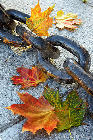 Free Beauty Of Fading Autumn Royalty Free Stock Photo - 256335