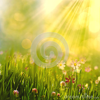 Free Beauty Spring And Summer Landscape With Fresh Daisy Flowers Royalty Free Stock Image - 94738126