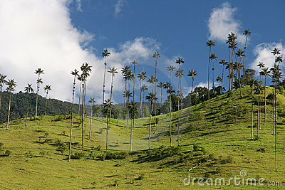 Beauty of Valle de Cocor