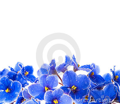 Beauty violet flowers
