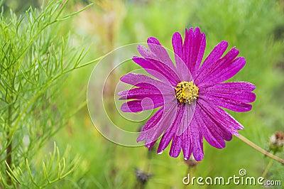 Beautyful pink flower on green