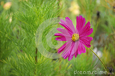 Beautyful pink flower on green