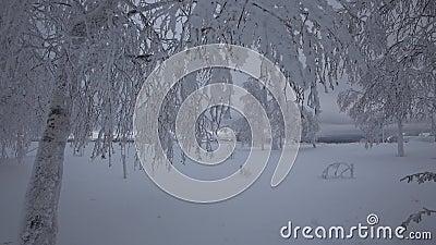 Beaux arbres, couverts par la neige en hiver banque de vidéos