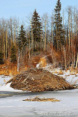 Free Beaver Dam In Winter Royalty Free Stock Photo - 4975775