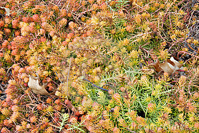 Bed of Sedum