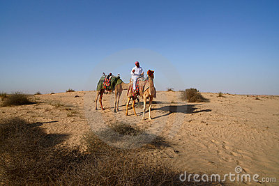 Bedouin on Camel Editorial Stock Image