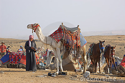 Bedouin and camel Editorial Photography