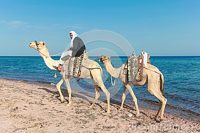 Bedouin on a camel Editorial Stock Photo