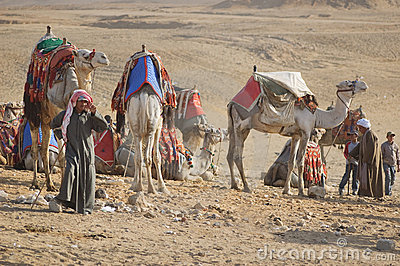 Bedouin and camels Editorial Stock Photo