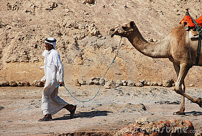 Bedouin man lead his camel to tourists Editorial Stock Image