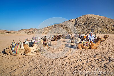 Bedouin people with camels resting on desert in Egypt Editorial Image