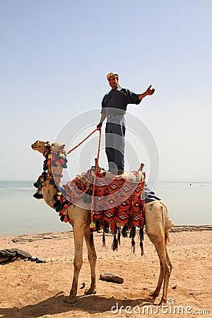 Beduin em seu camelo em Egipto