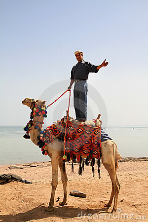 Beduin on his camel in Egypt