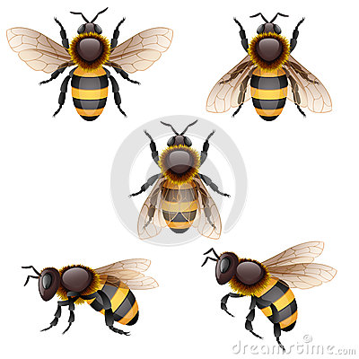Free Bee Stock Photos - 26142713