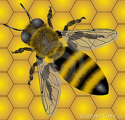 Free Bee Stock Photography - 2900572