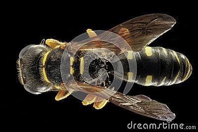 Bee Free Public Domain Cc0 Image