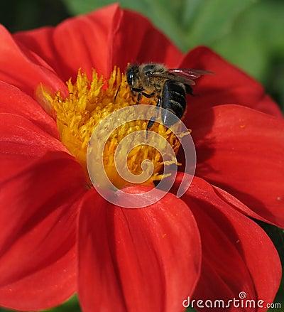 Bee Activity