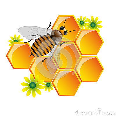 Free Bee And Honeycomb Stock Images - 25014224