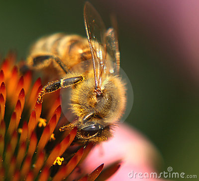 Free Bee At Work Stock Images - 5546584