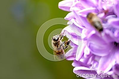 Bee behind work.