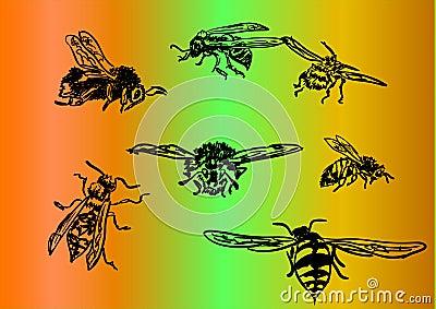 Bee,bumblebee,wasp