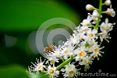 Bee on flowers
