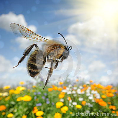 Free Bee Flying Over Colorful Flower Field Stock Image - 31098991