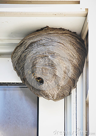 Free Bee Hive Nest Hanging From House Royalty Free Stock Photo - 49675455