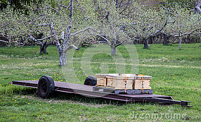 Bee hives in an orchard