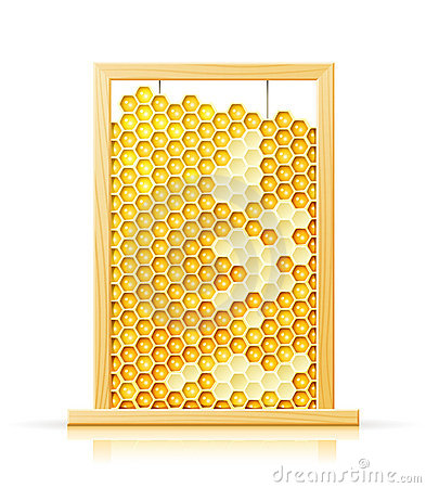 Bee honeycomb in frame