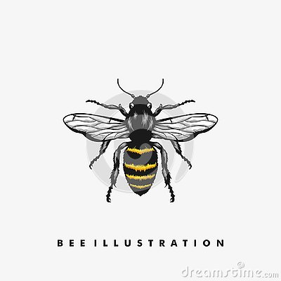 Bee illustration vector Design template Vector Illustration