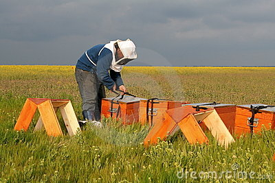 Bee keeper at work