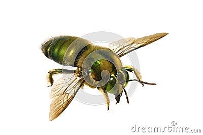 Bee, Metallic Green Carpenter