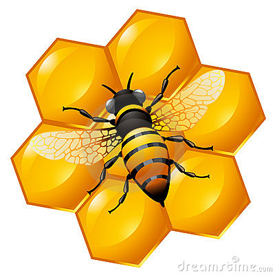 Free Bee On A Part Of Honeycomb Stock Photo - 19861960